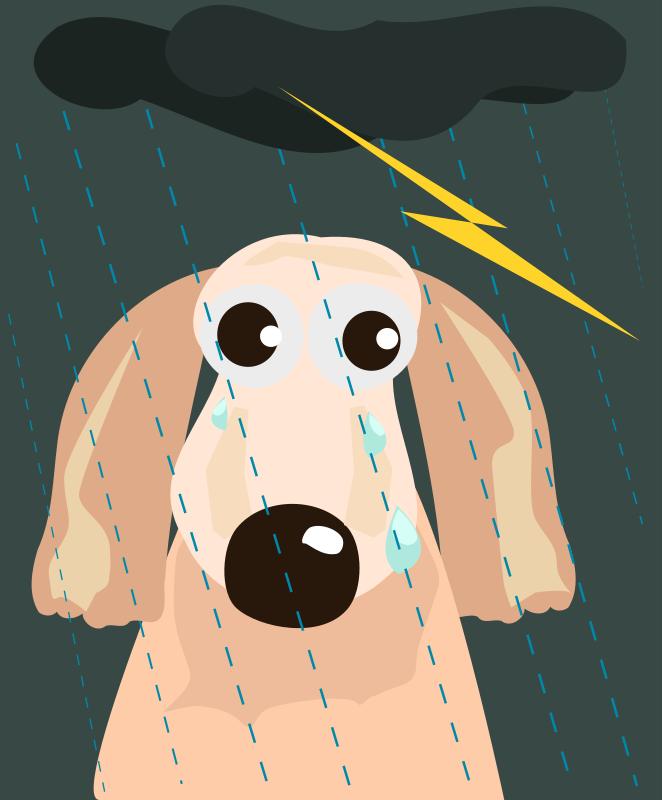 Free sad dog in the rain