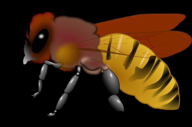 Free Honeybee