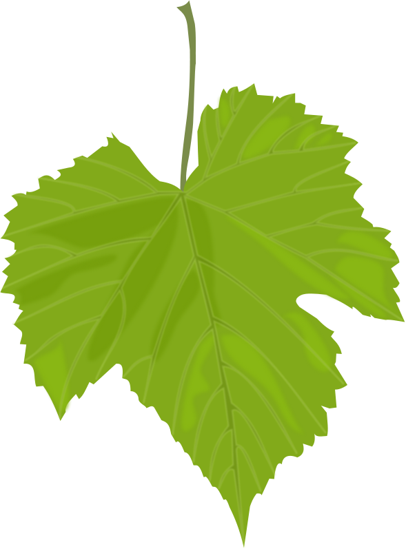Free Grape Leaf