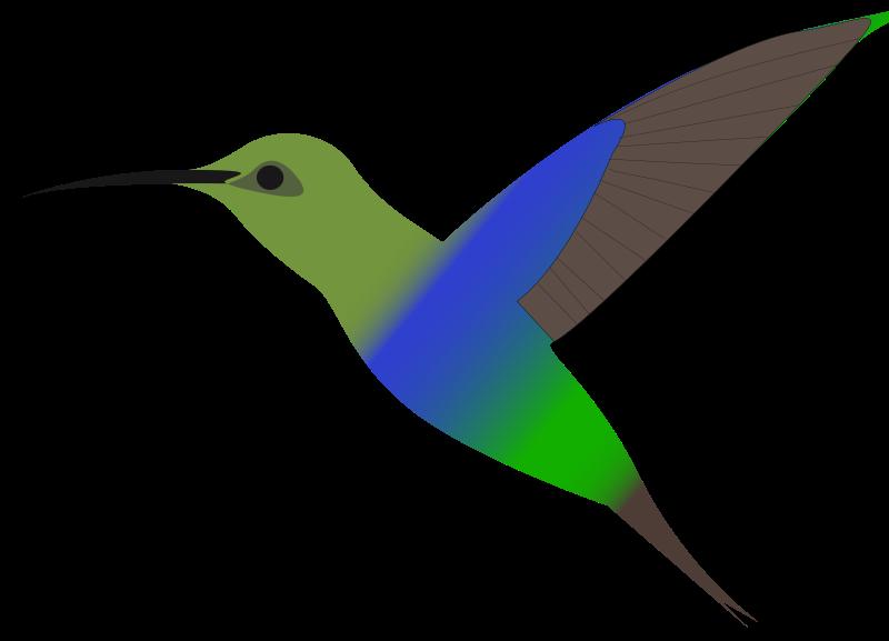Free humming-bird