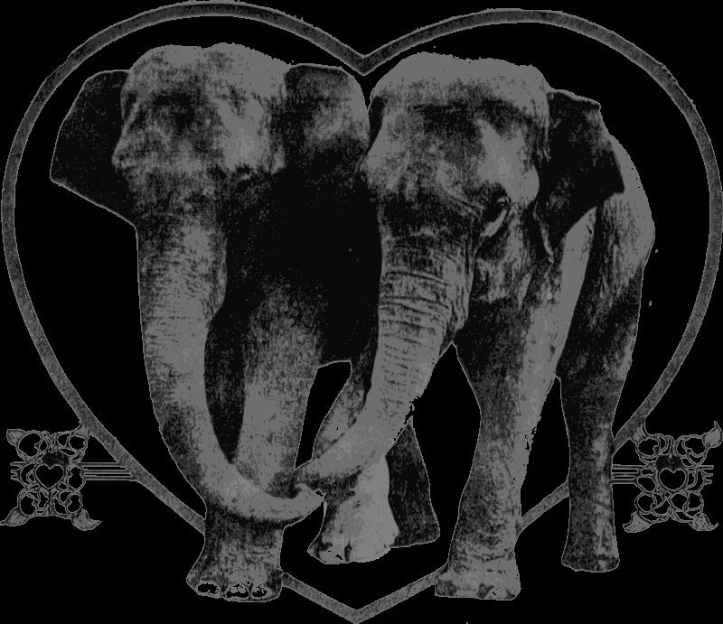 Free Lover Elephants