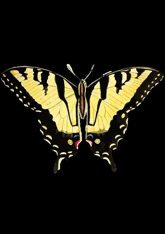 Free Papilio glaucus