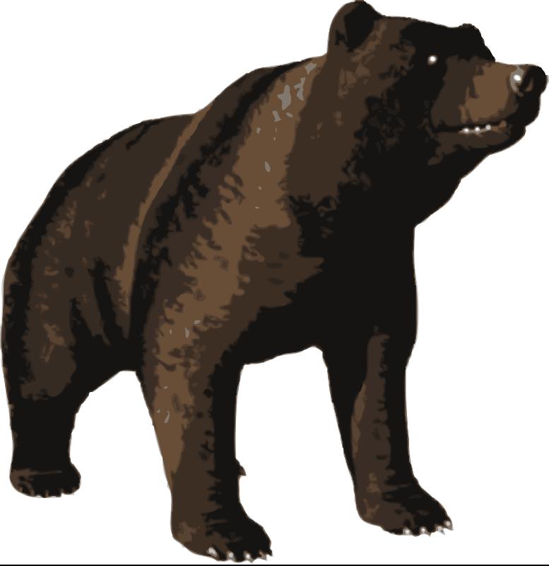 Free Brown bear