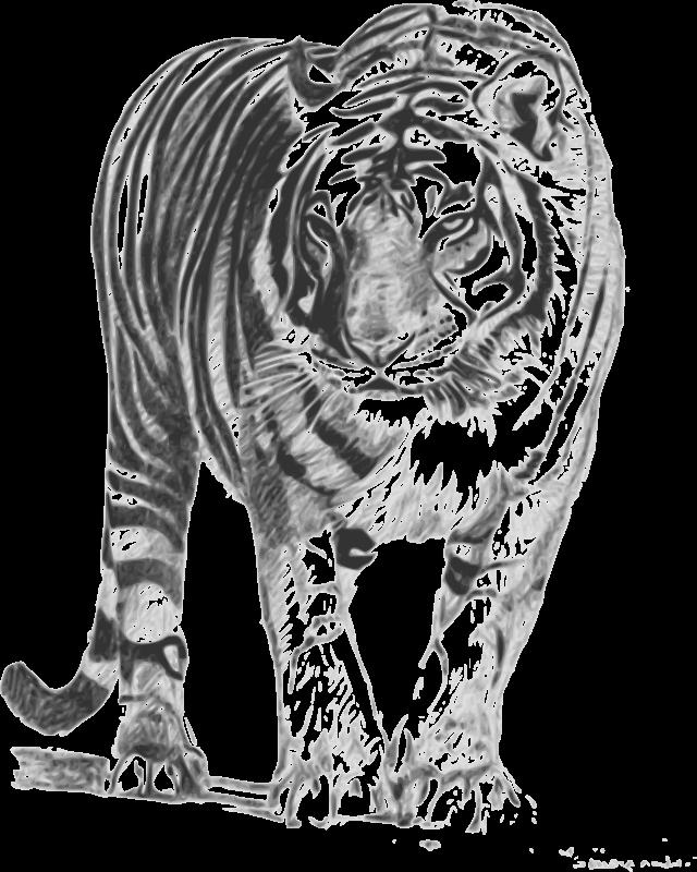 free clipart bengal tiger karthikeyan rh 1001freedownloads com bengal tiger head clipart bengal tiger head clipart