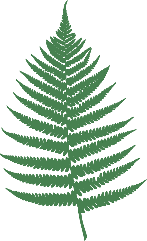 Free Fern leaf
