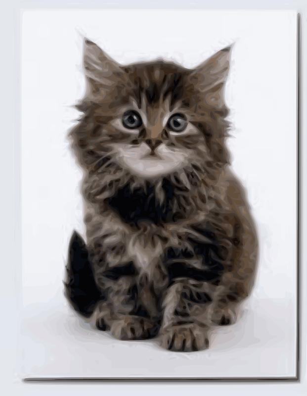 Free Sweet kitten