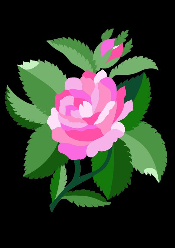 Free Design for damask rose