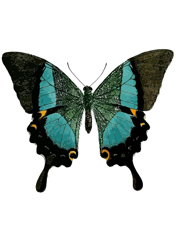 Free Papilio buddha