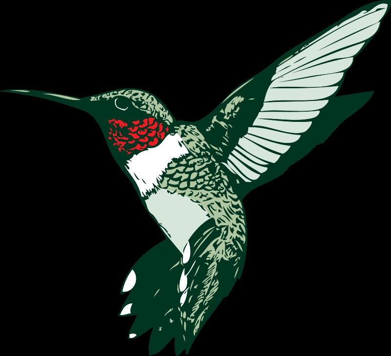Free Ruby-throated Hummingbird