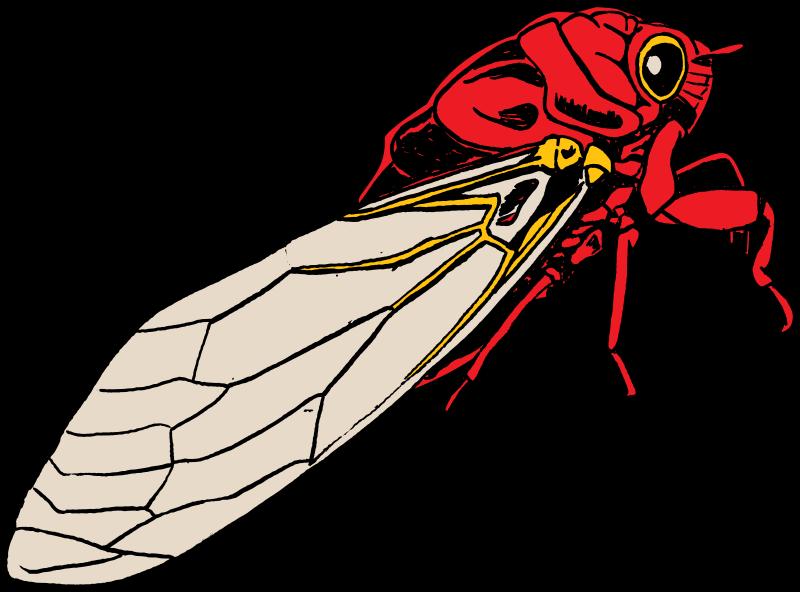 Free Cicada