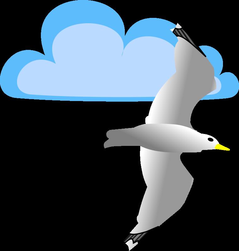 Free Möwe vor Wolke