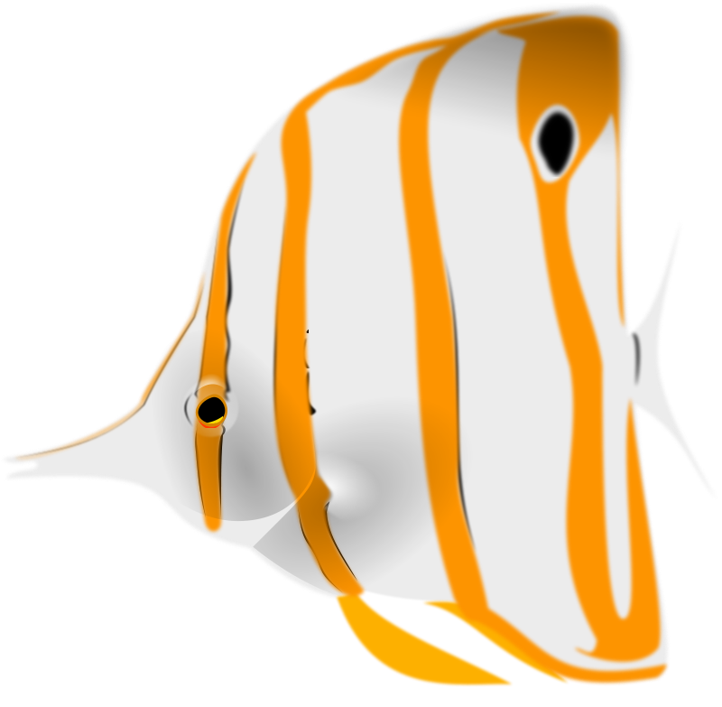 Free Copperband Butterflyfish