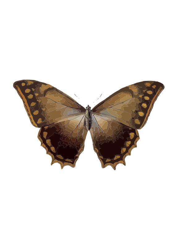 Free Clipart: Morpho theseus | Borboleta.org