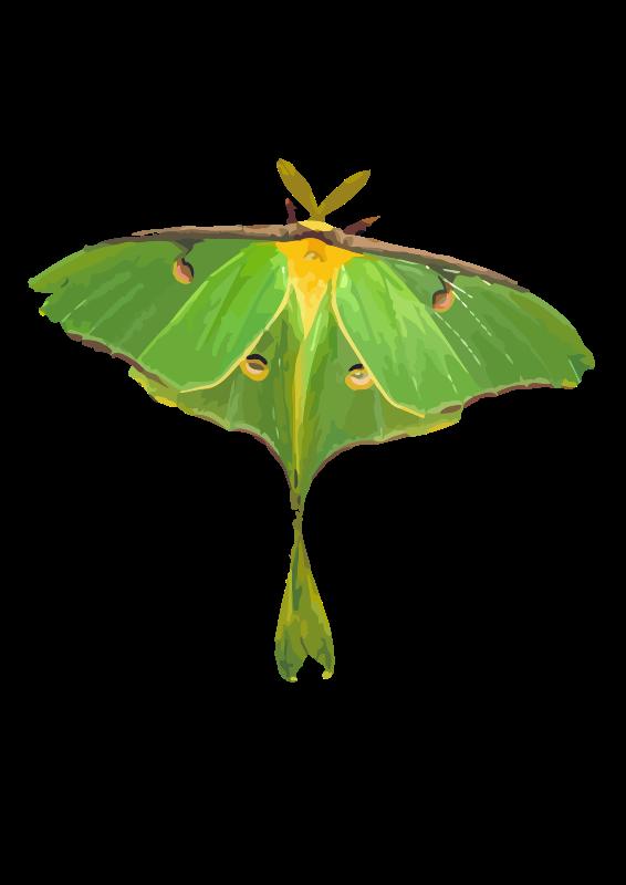 Free Luna Moth / Actias luna