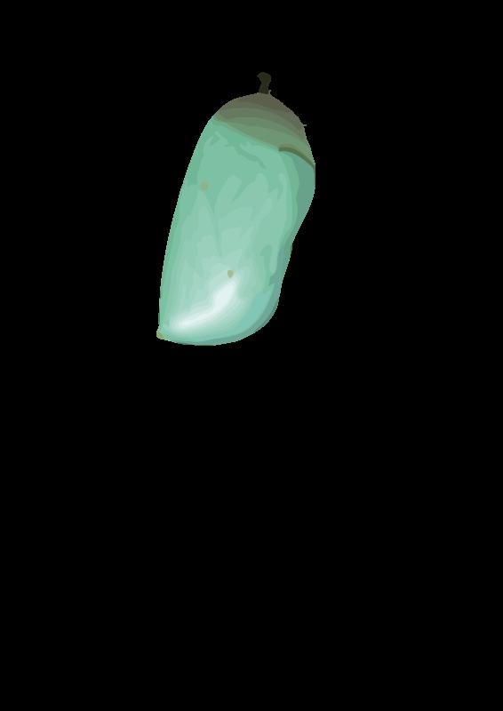 Free Chrysalis (D. plexippus)