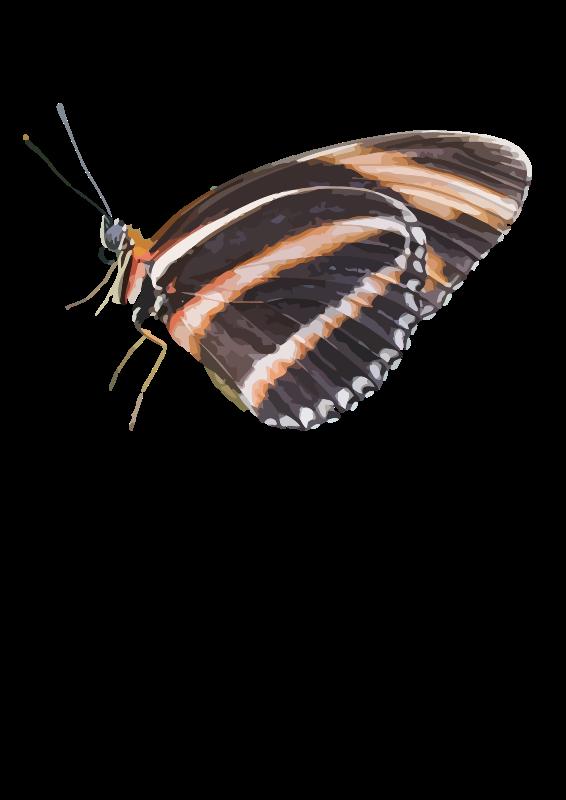 Free Dryadula phaetusa