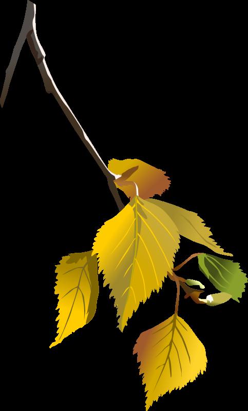 Free Birch leafs - autumn