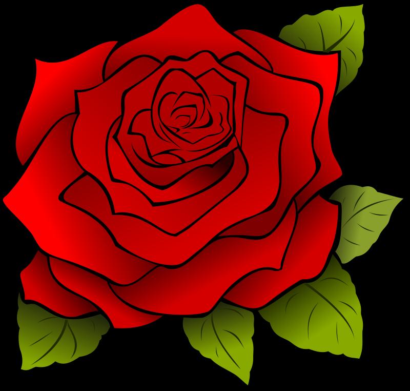 Free Rosa | Rose