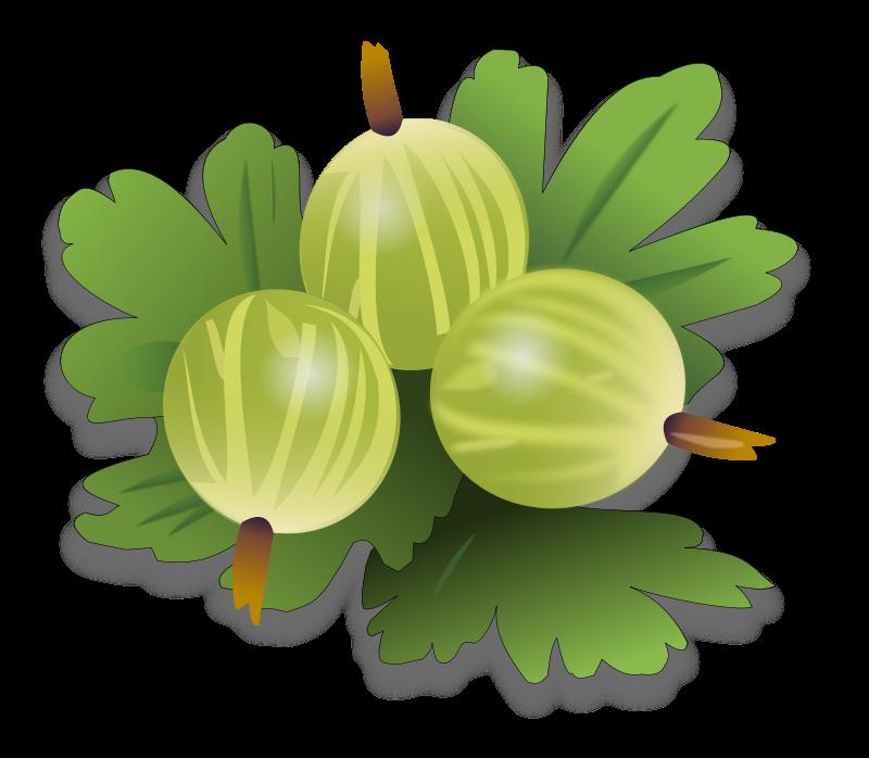 Free green gooseberrys