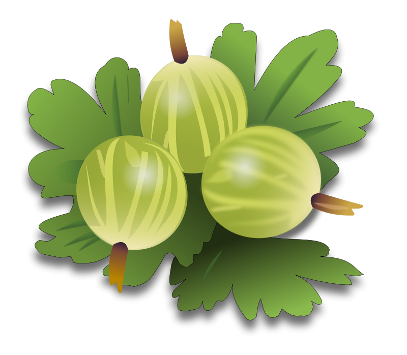 Free Clipart: Green gooseberrys | marauder