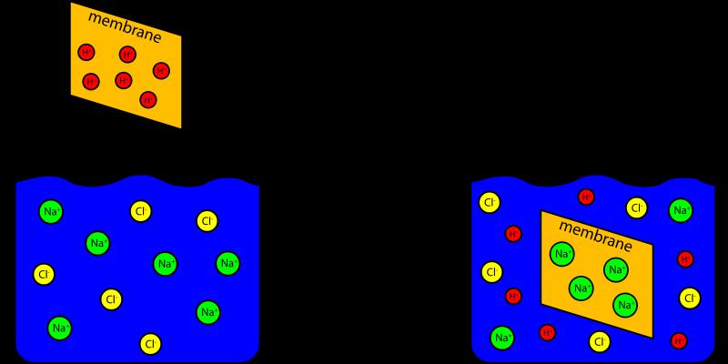 Free Ion Exchange Capacity Experiment