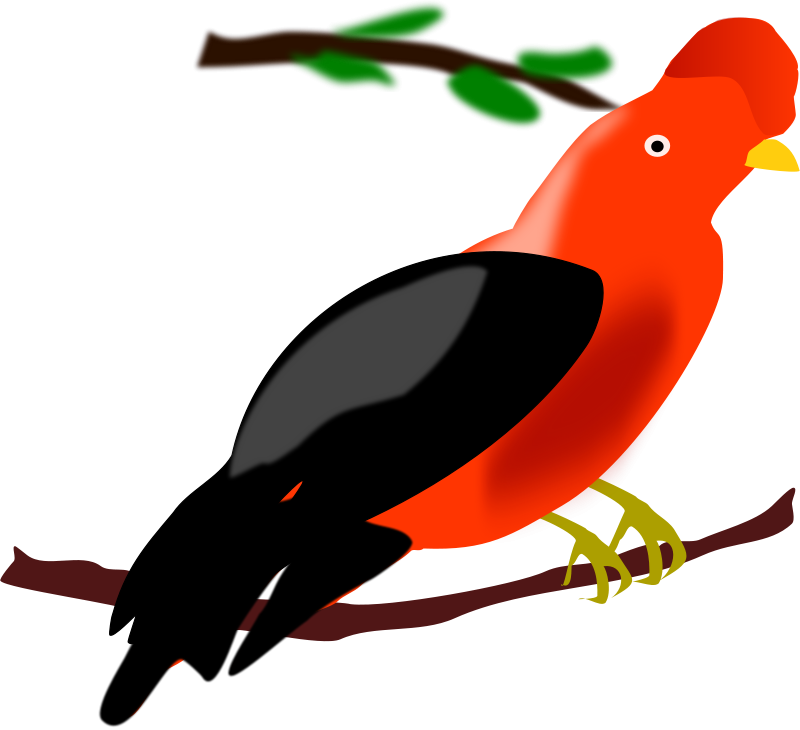 Free Clipart: Andean Cock-of-the-rock