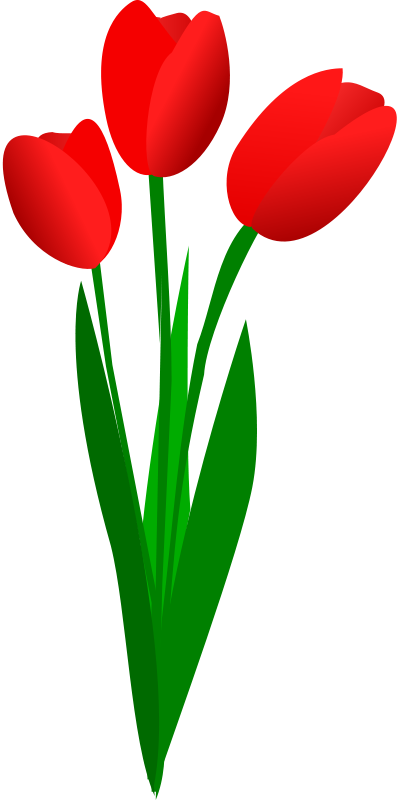 Free three red tulips