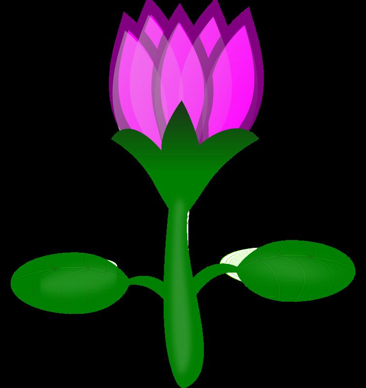 Free Lotus