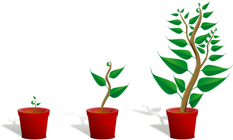 Free Green plant in its pot in three different phases of growth