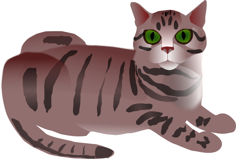 Free Tabby Cat