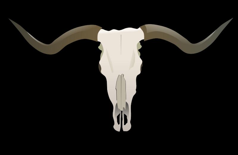 Free Longhorn Skull