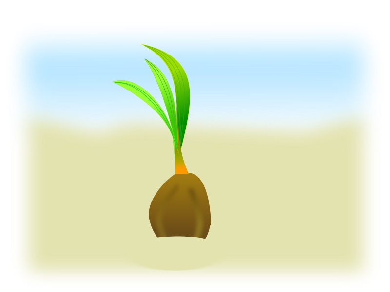 Free Clipart: Coconut seed | netalloy