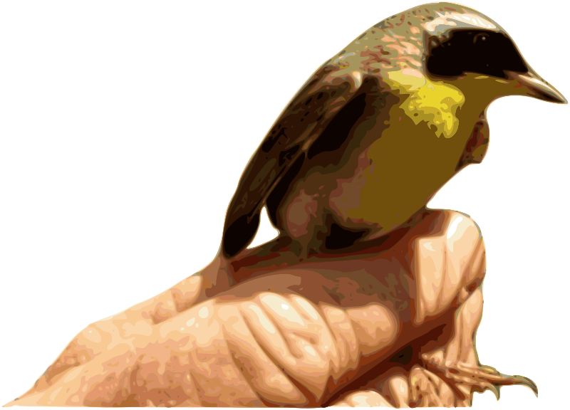 Free Yellowthroat Bird