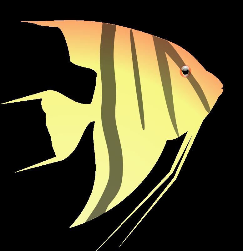 Free Angel Fish