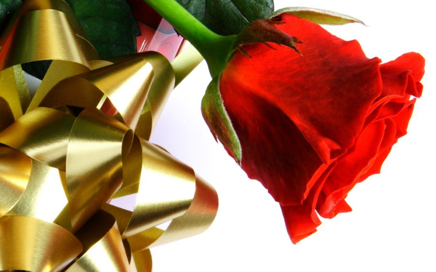 Free Wallpapers: A Lonely Red Rose   Love
