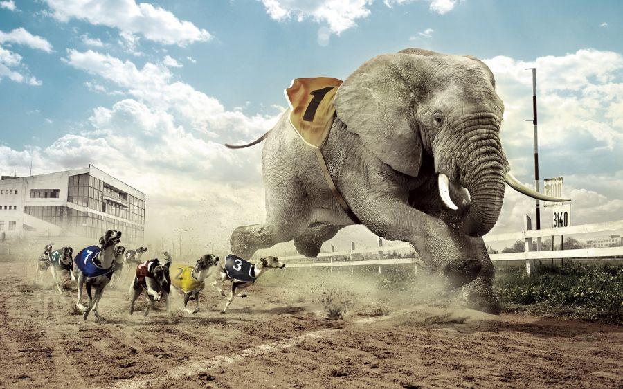 Free Wallpapers: Dogs Vs Jumbo Elephants Race Humor Funny Photomanipulation   Digital Art