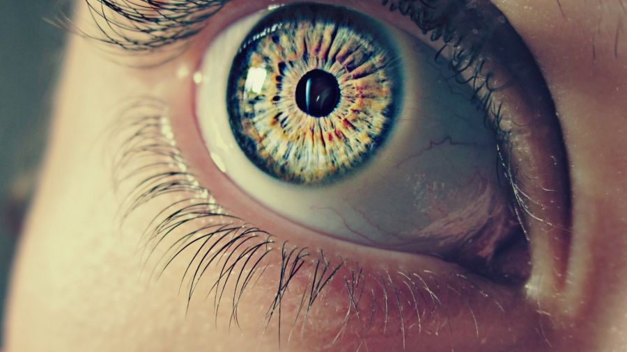 Free Wallpapers: Inside Your Eyes Closeup Macro Photography | Photography
