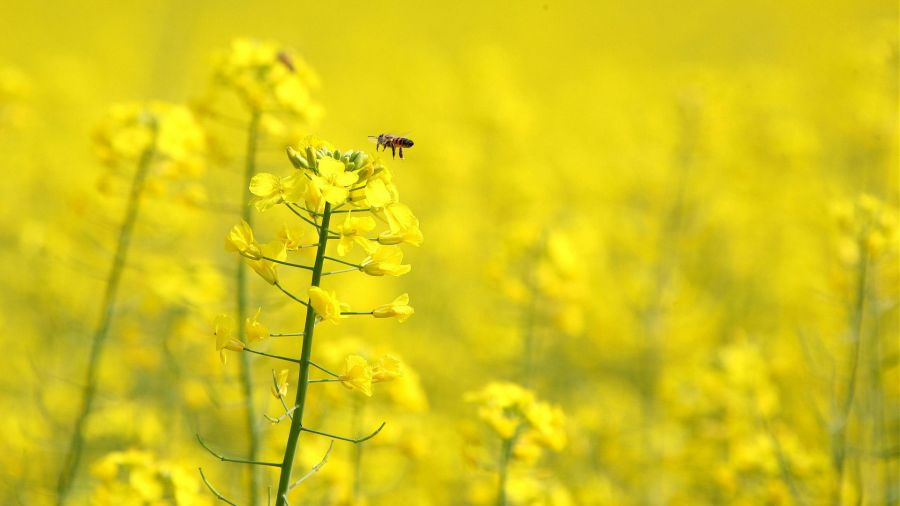 Free Wallpapers: Only Yellow Flowers | Nature