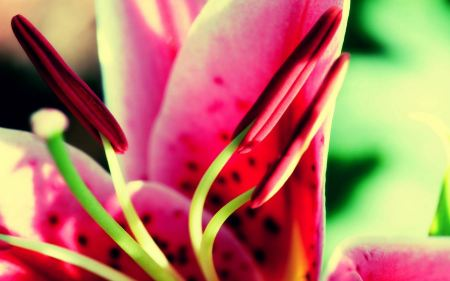 Free Flower Nature