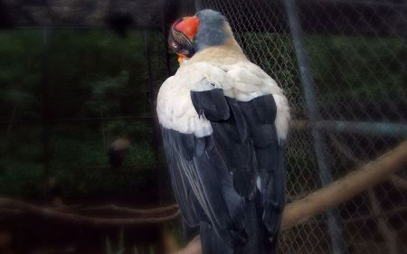 Free Bird Widescreen