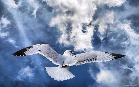 Free Fotogenova Bird Widescreen