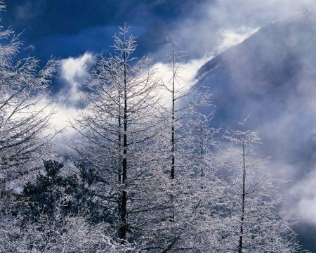 Free Beautiful Winter Landscape