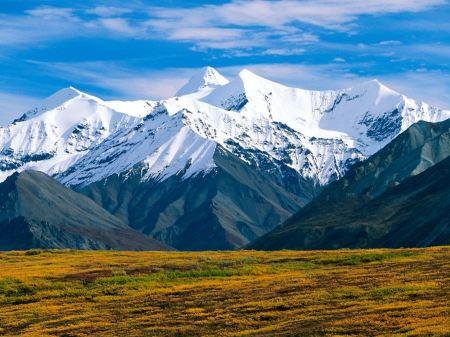 Free Denali National Park  Alaska