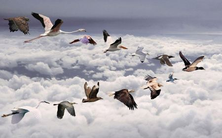 Free All Birds Widescreen