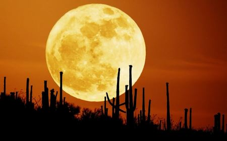 Free Rising Moon in Desert