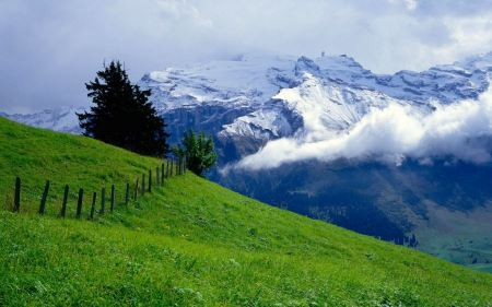 Free Green Pastures and Snowy Mountains