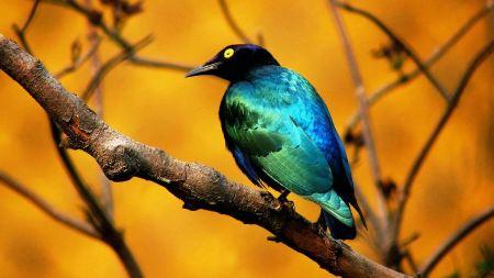 Free Blue Bird on a Branch