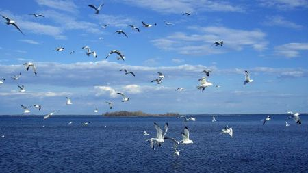 Free Seagulls Over Water