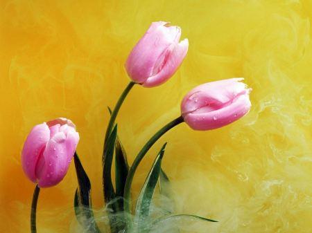 Free Pink Buds & Yellow Smoke