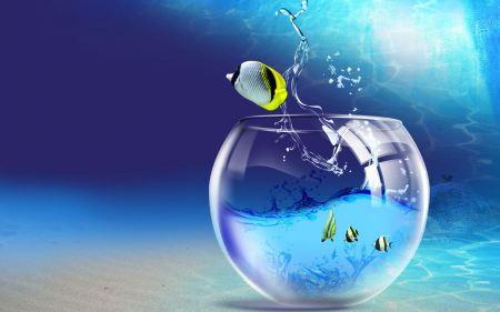 Free Fishy Life